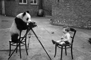 Pandabär fotografiert Kleinkind